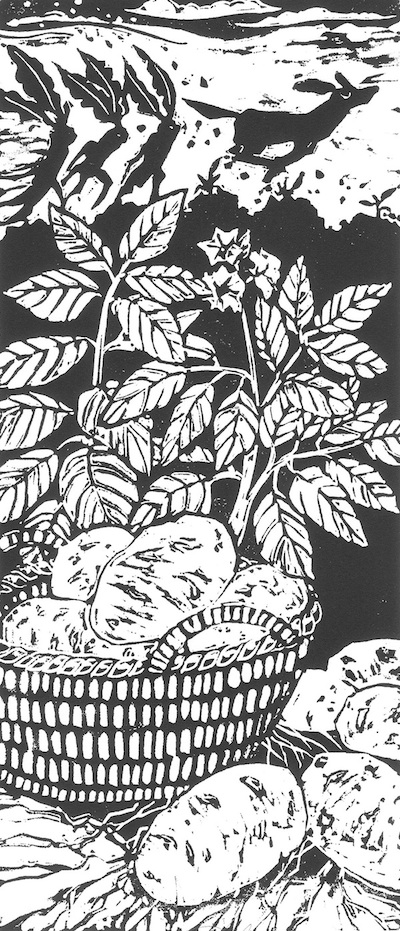 Mandrake, Mandragora officinarum Potato, Solanum tuberosa